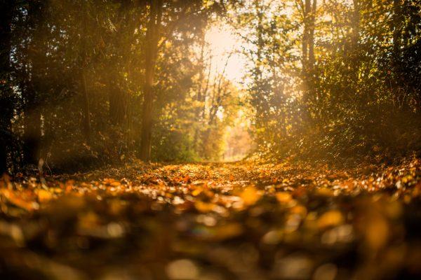 pexels-photo-leaves